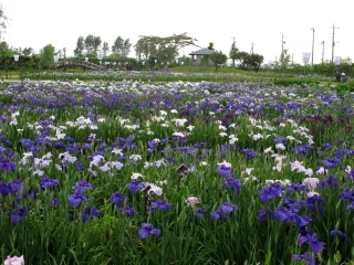 水郷佐原 水生植物園
