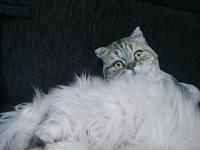 猫のクッションとカブ・カル201402200002