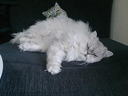 猫のクッションとカブ・カル201402200003
