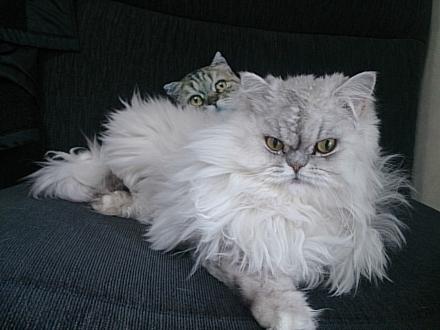 猫のクッションとカブ・カル201402200004