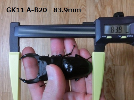83.9mm