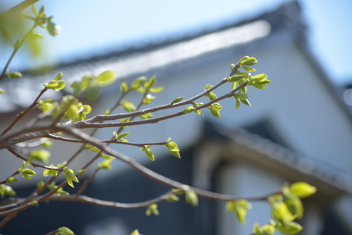Garden-3_20140407.jpg