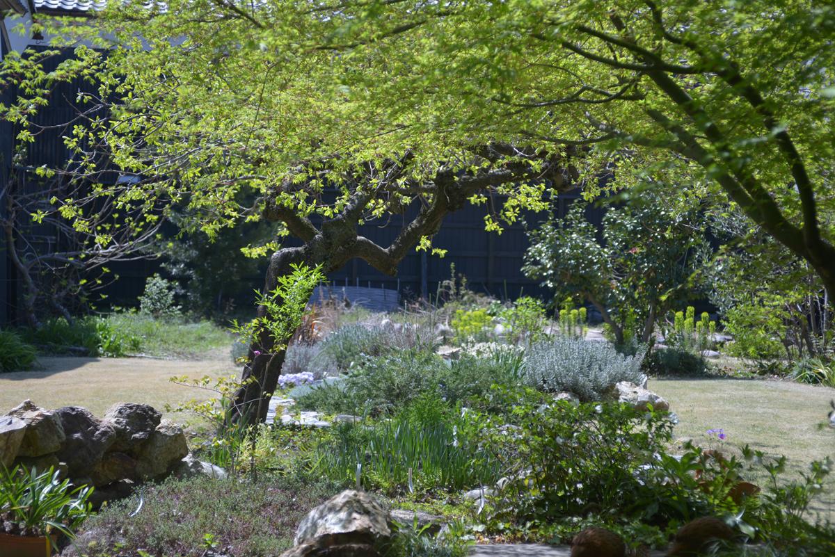 Garden-5_20140415.jpg