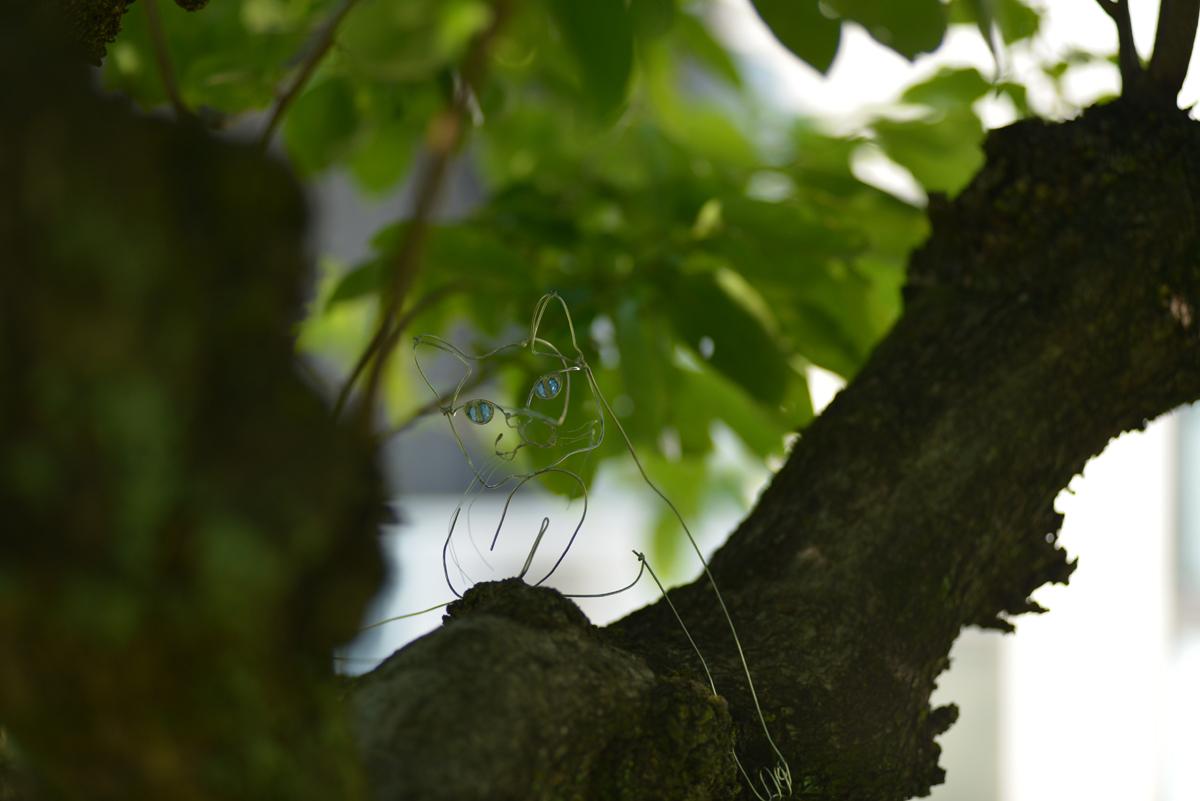 Hajimeko-9cat2_20140531.jpg