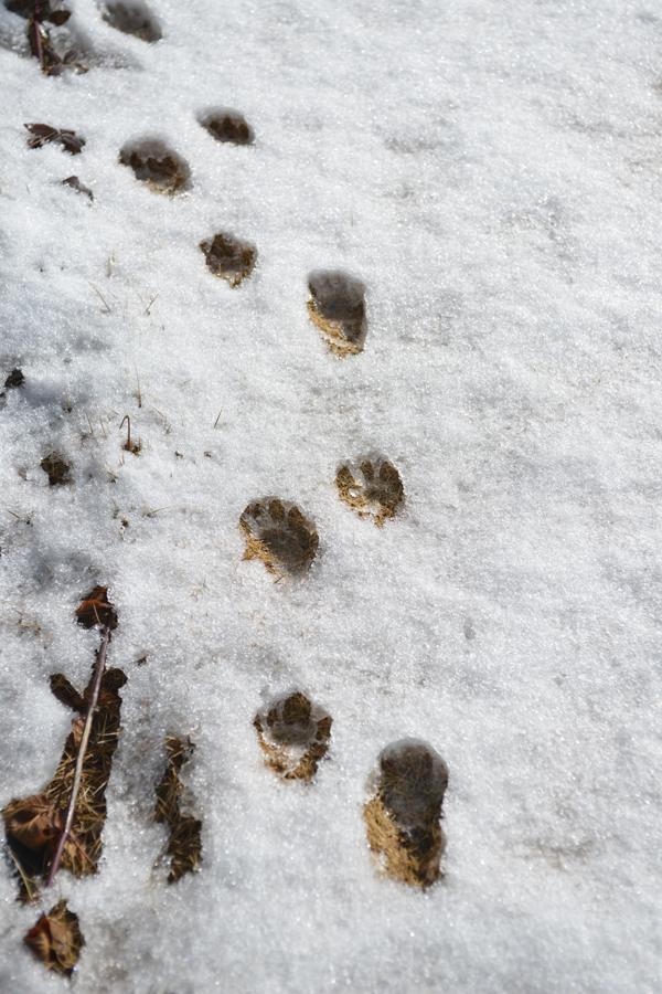 Snow-1_20140209.jpg