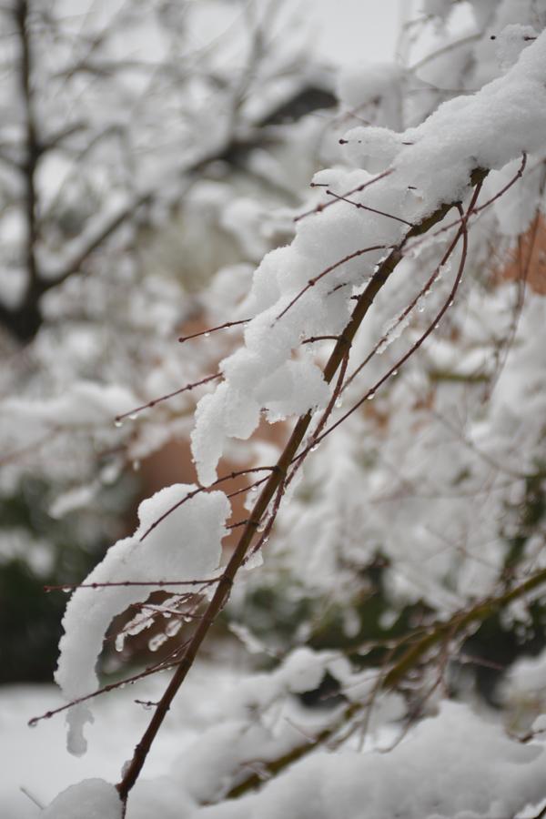 Snow-3_20140214.jpg