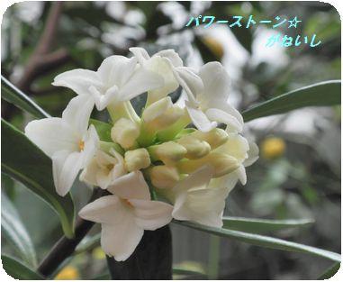 白い花UP