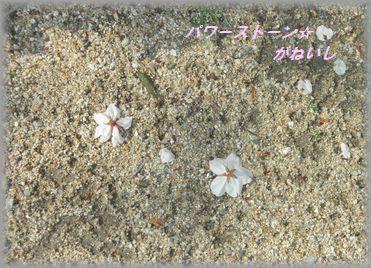 砂の上の桜