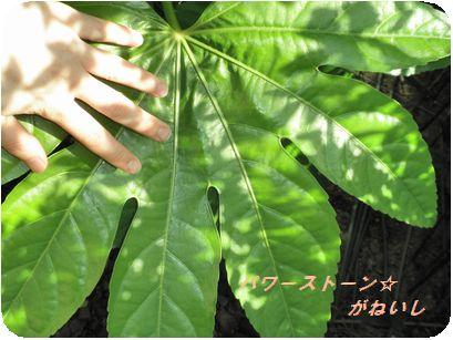 葉と手の比較