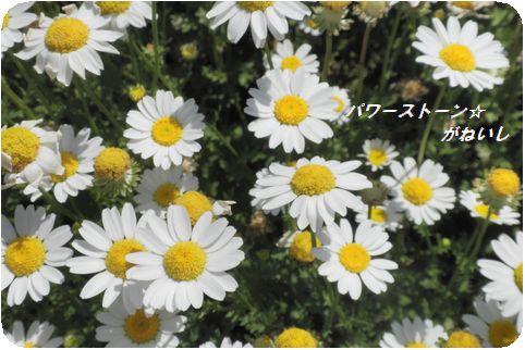 白い花のUP