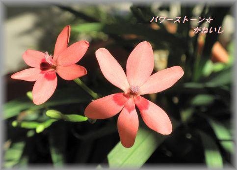 日陰のお花 UP