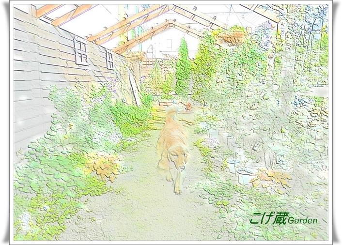 CIMG3680_g.jpg