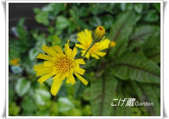 DSC00683_R.jpg
