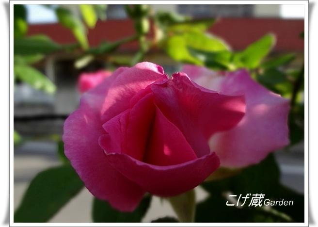 DSC00702_R.jpg