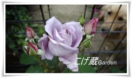 DSC00944_R.jpg