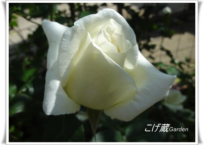 DSC01192_R.jpg