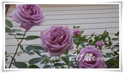 IMGP0344_R.jpg