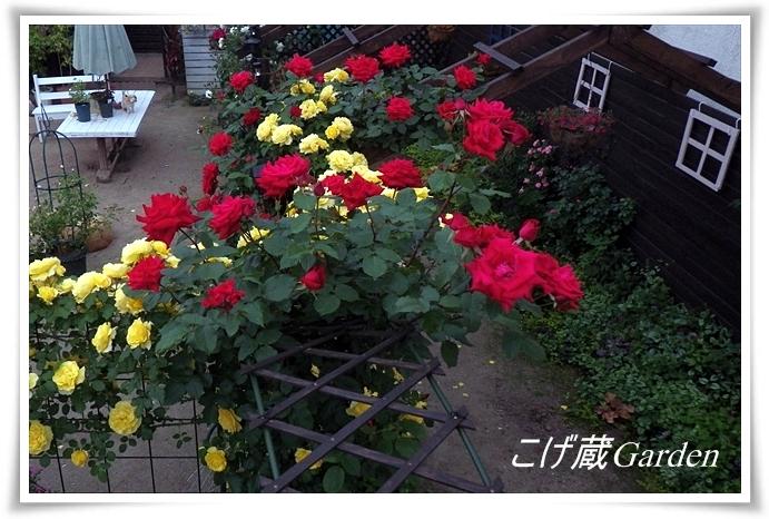 IMGP2004a_R.jpg
