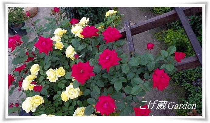 IMGP2005_R.jpg