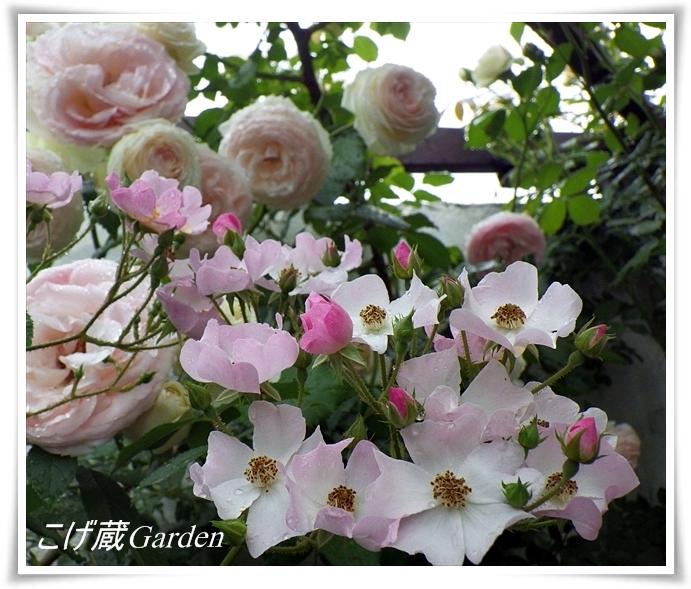 IMGP2446a_R.jpg