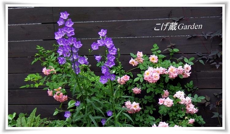 IMGP3500_R.jpg