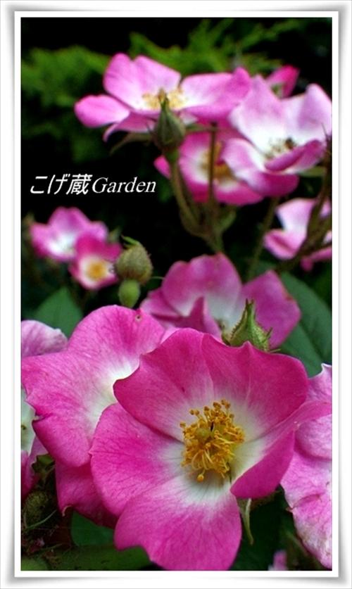 IMGP3684_R_R.jpg