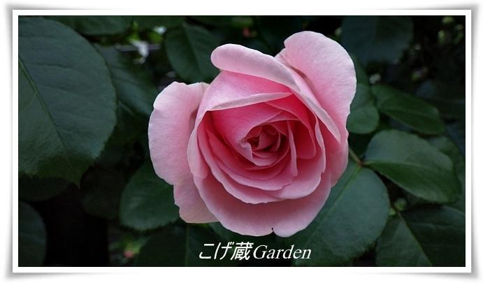 IMGP3970_R.jpg
