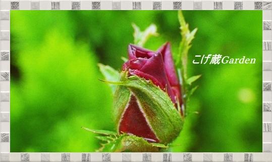 IMGP7561_R.jpg