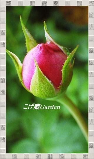 IMGP7564_R.jpg