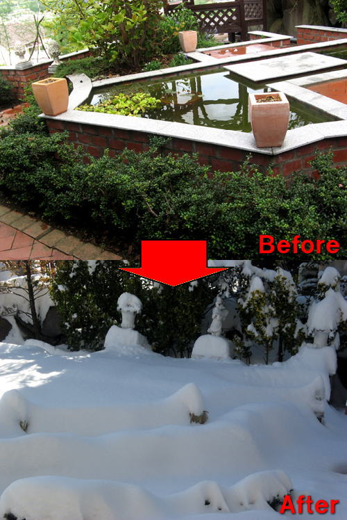 記録的な大雪-9