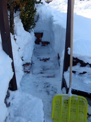 ガーデン復旧作業-22