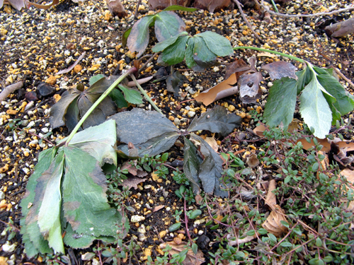 ウォーターガーデンサイドの植物の様子-1