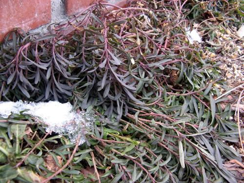 ウォーターガーデンサイドの植物の様子-10