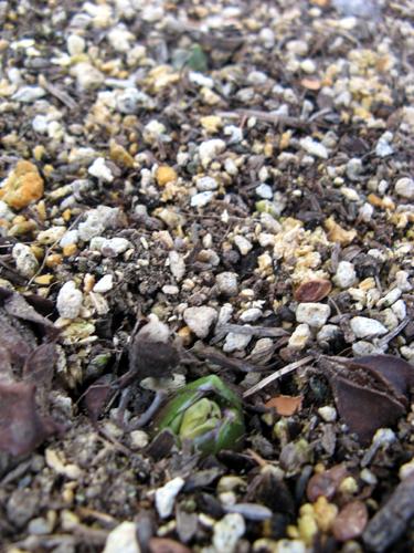 ウォーターガーデンサイドの植物の様子-11