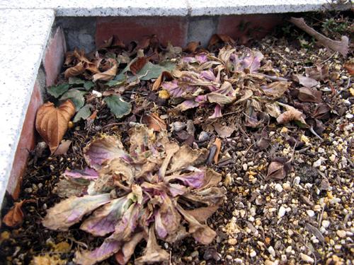ウォーターガーデンサイドの植物の様子-12