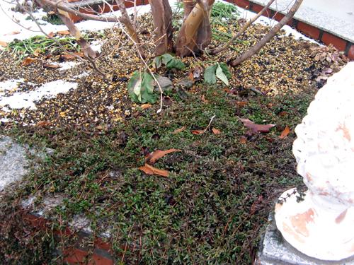 ウォーターガーデンサイドの植物の様子-13