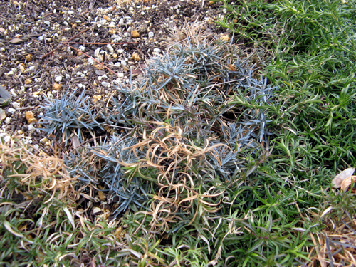ウォーターガーデンサイドの植物の様子-7