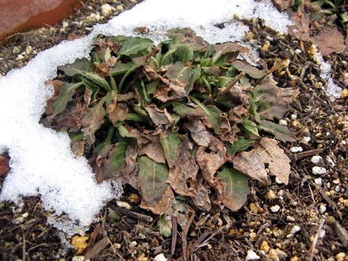 ウォーターガーデンサイドの植物の様子-9