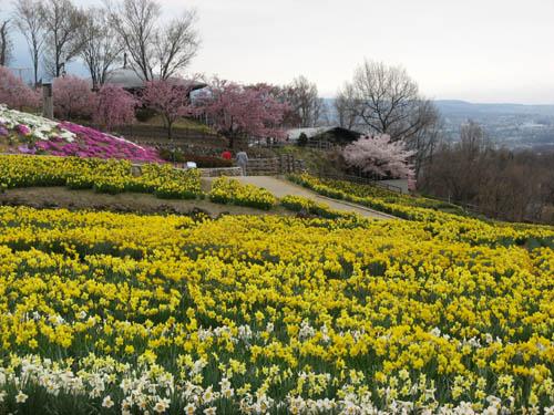 桜の季節-3