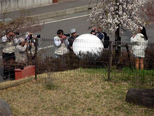 桜の季節-5