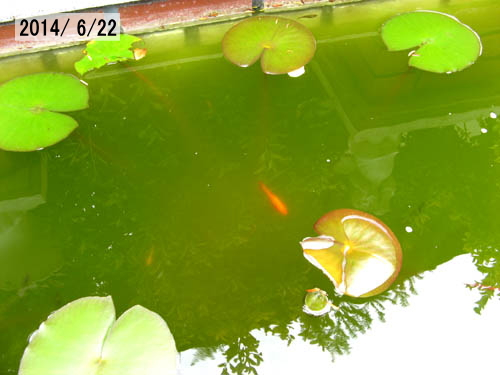 20140712-5.jpg