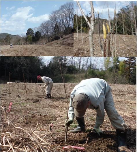 国民参加・植樹