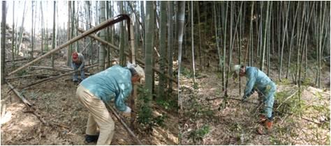 国民参加・竹林整備