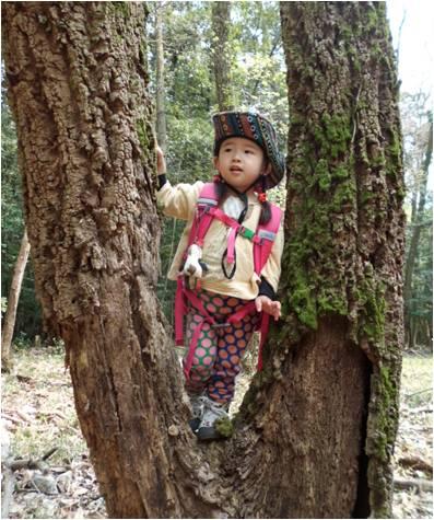 リトル木登り
