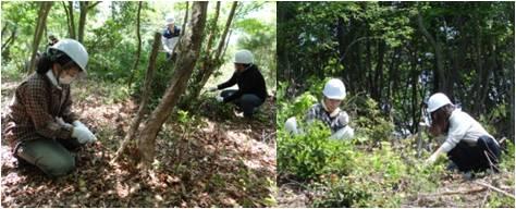 平和の森・作業1