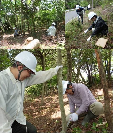 平和の森・作業2