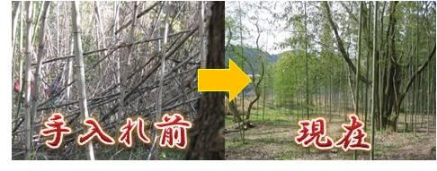 竹文化・竹林