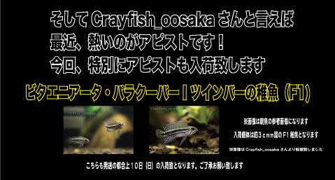 2th-2_10.jpg