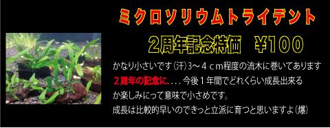 2th-4_11.jpg