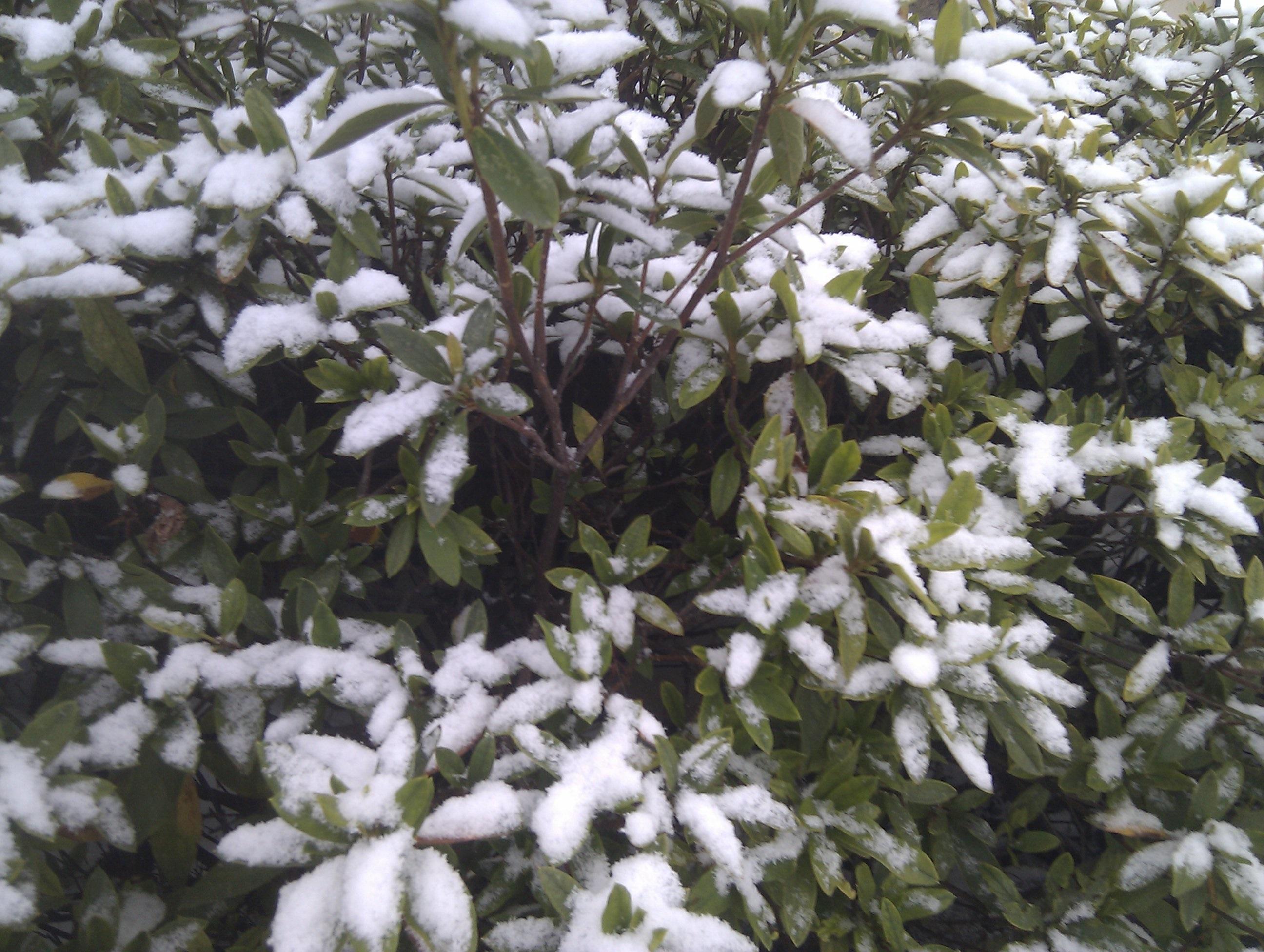 20140211雪